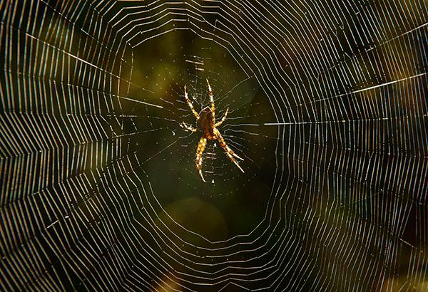 Strategize-like-spiders